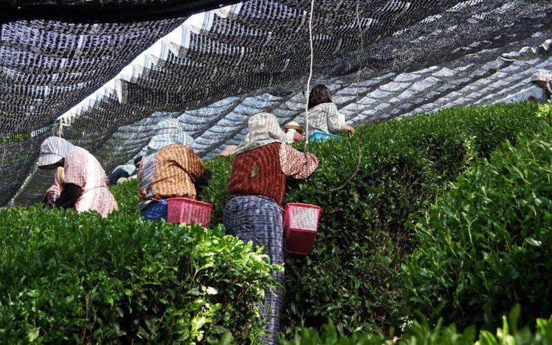 Общие термины японской чайной культуры